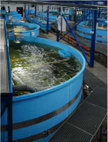 Бассейн для рыбы 3,0*2,5*1,5 -8 мм